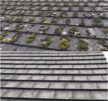 Commercial Roof and Gutter Cleaning